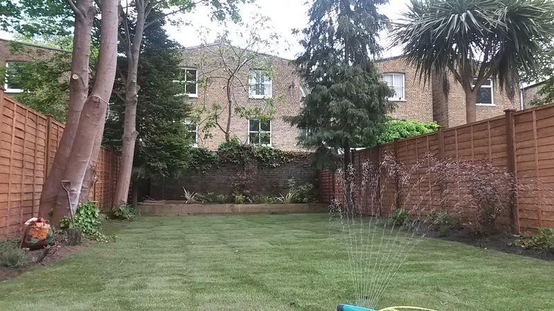Arragon Road main garden after 2