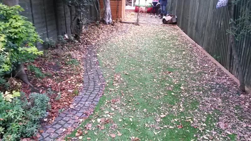 Sam's garden before 1
