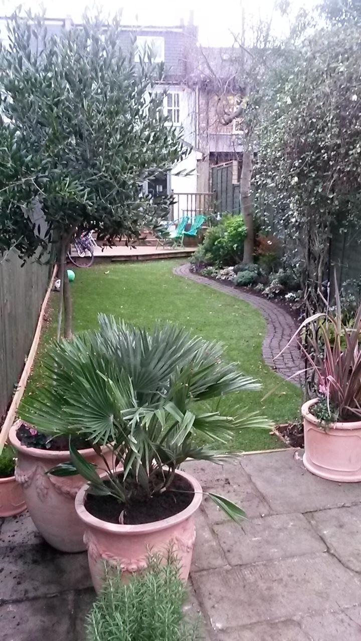 Sam's garden after 2